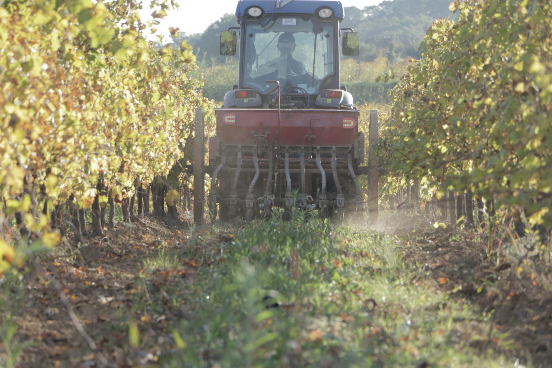 Tracteur dans la vigne